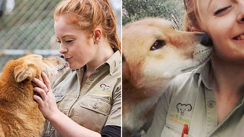 "Ms Mitchell-Collett said she doesn't blame the dingo who was only acting on its ""natural instincts"". (Facebook)"