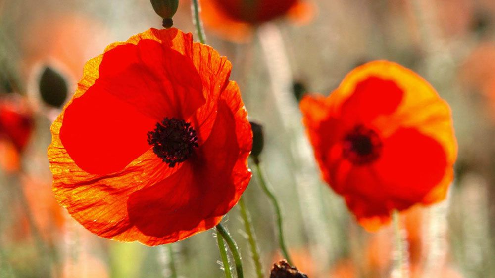 England's football team will defy a FIFA edict on Remembrance Day. (AAP)