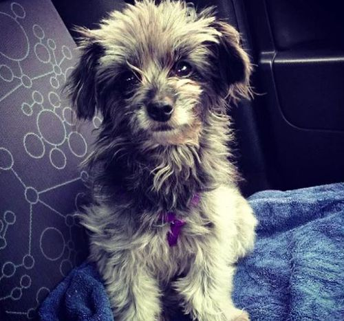 Cupcake was adopted by a new owner after the dog's sitter moved to Adelaide and died.