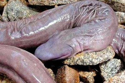 Penis snake