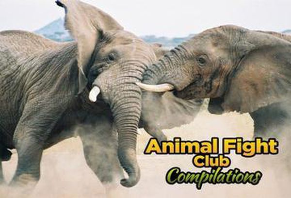 Animal Fight Club Compilations