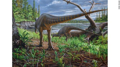 New species of turkey-sized dinosaur discovered in Victoria