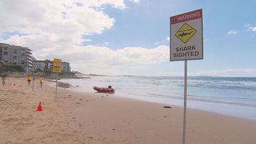 Four Sydney beaches have been closed for 24 hours after a shark sighting at Cronulla.