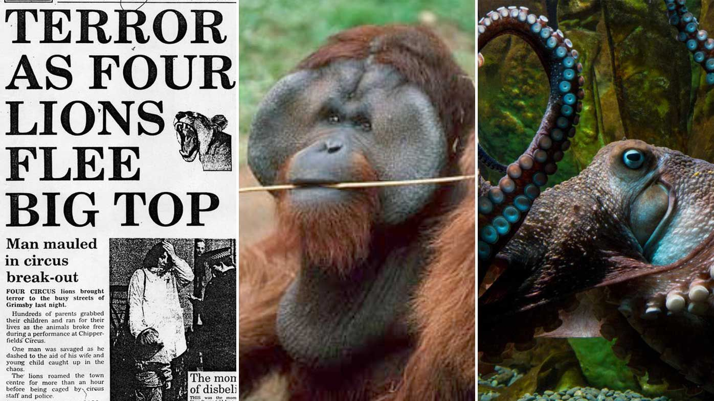 The best animal escape stories