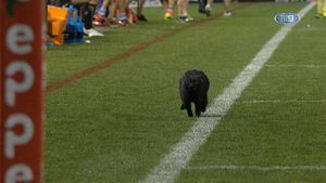 Mini-panther bolts across field