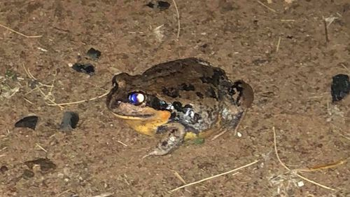 A frog basking in the wet on Kelly Anderson's Tottenham property.