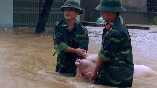 Two soldiers walk a pig through flood water in northern province of Thanh Hoa, Vietnam (Trinh Duy Hung/Vietnam News Agency via AP).