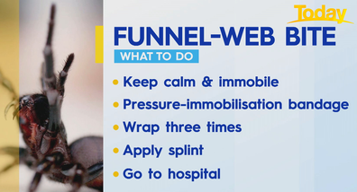 How to treat a funnel-web bite.