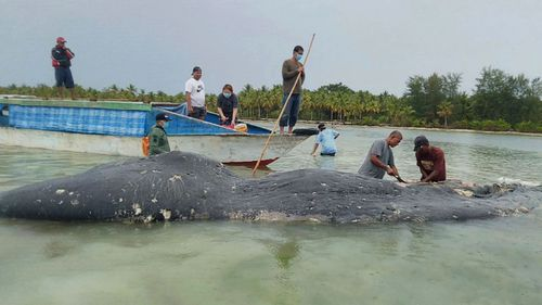 Rescuers from Wakatobi National Park found the rotting carcass of the 9.5-metre sperm whale on Monday in Southeast Sulawesi province.