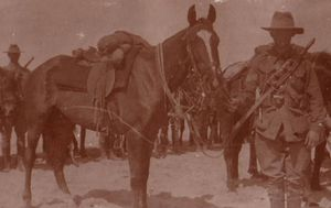 Heroic Qantas founder's link to Australia's remarkable war horses