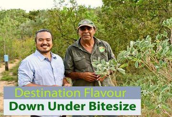 Destination Flavour Down Under Bitesize