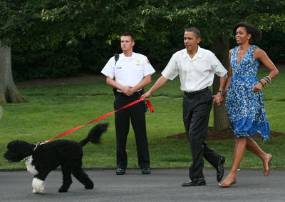Former First lady Michelle Obama walk first dog Bo to a picnic for members of Congress in 2010. Michelle sports a pretty blue day dress.