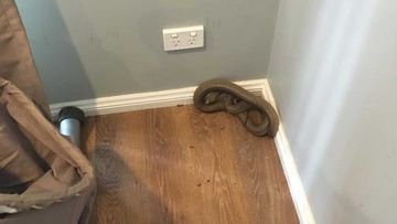 Snakes tend to come indoors during extreme heatwaves.