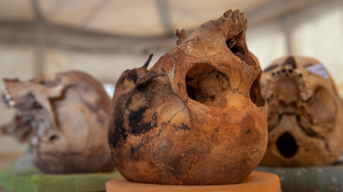 Skulls sit on display in Saqqara, south of Cairo, Egypt, Sunday, January 17, 2021. (AP Photo/Nariman El-Mofty)