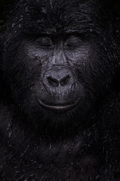 'Reflection'. Winner - Animal portraits.