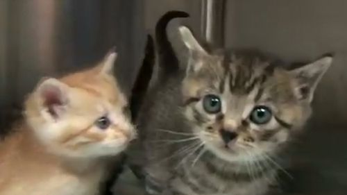 Best Friends Animal Society plan to take more kittens in.