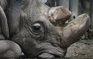 Seven of the world's critically endangered species