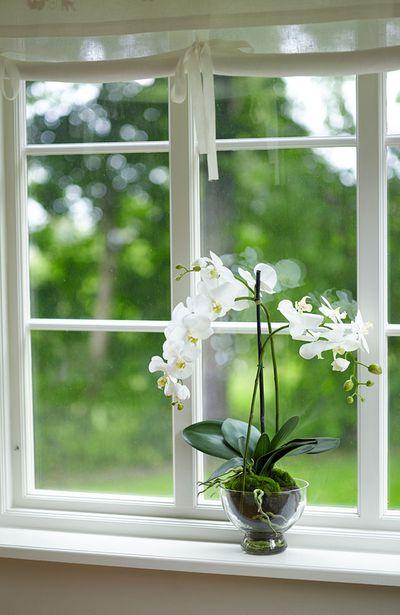7. Orchids