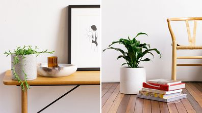 How adding indoor plants to your home office can improve productivity and mood