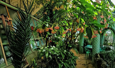<strong>Fabulous fish pond in an indoor jungle</strong>