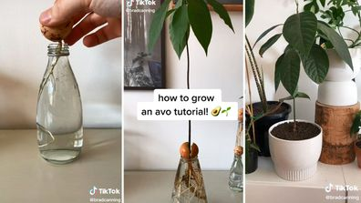 Brad Canning's tutorial on growing an avocado plant went viral on TikTok.