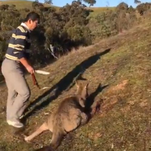 It's unclear why the man decided to kill the kangaroo. (Facebook)