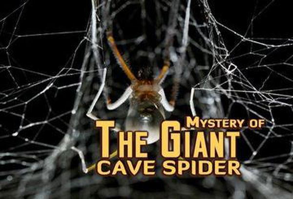 Mystery of the Giant Cave Spider