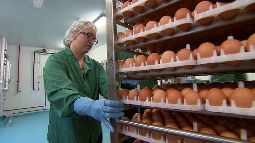 Inside a Melbourne factory, millions of eggs are used to produce a flu vaccine. (9NEWS)