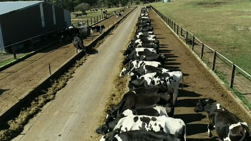 Coles Woolworths milk prices increase 10 cents per litre