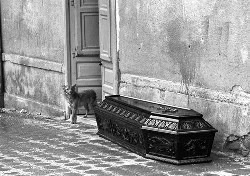 A dog watching over the coffin of his owner who died in the Belice earthquake.