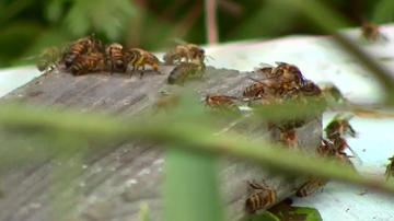 SA researchers have developed a vaccine that could reduce severity of bee stings in those with allergies.