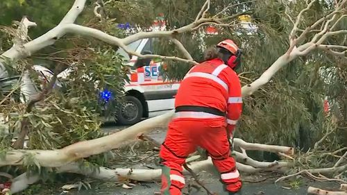 An SES member cuts up a large tree that's fallen over a road.