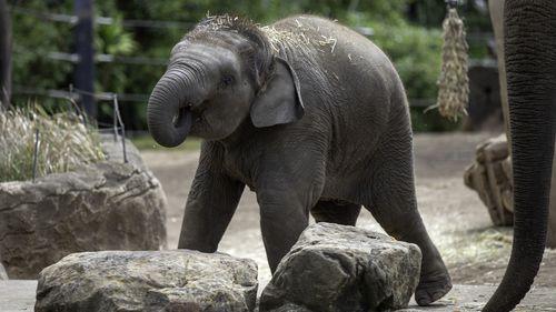 Taronga Zoo in Sydney has announced the death of elephant, Jai Dee.