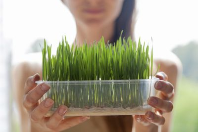 <strong>Swap wheatgrass for...</strong>