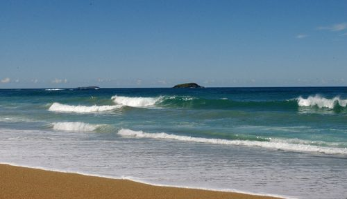 A total of 64 sharks were tagged at Forster and 16 at Coffs Harbour. (AAP)