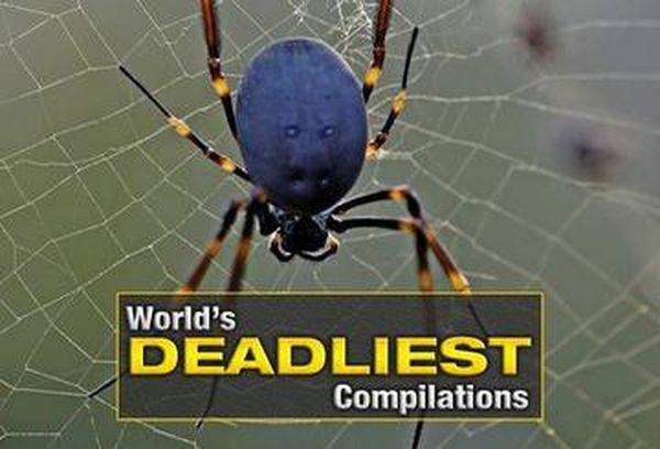 World's Deadliest Compilations