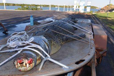 Huge 4.3m croc found lurking around popular Darwin fishing spot
