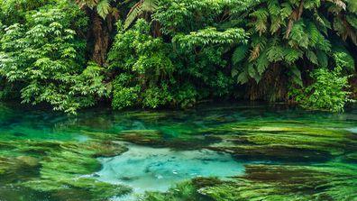 Te Waihou Blue Springs