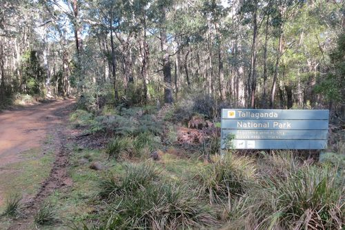 The mother and son were found on a remote fire trail in the Tallaganda National Park.