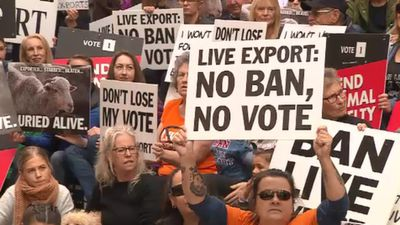 Thousands of Aussies protest against live animal exports
