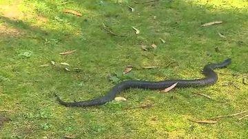 Snakes news headlines - 9News