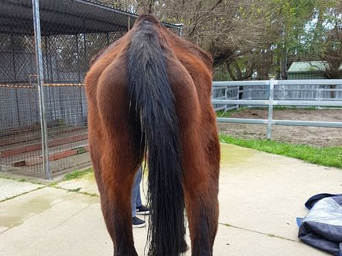 Collie horse animal cruelty charges