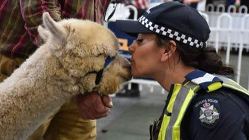 Death of mental health mascot Alpaca shatters tight-knit community