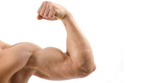 Does training one bicep grow the other? Volunteers wanted for new study