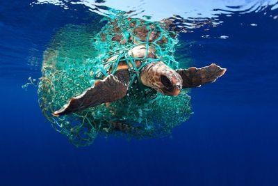 Marine Conservation Photographer of the Year 2019: 'Caretta caretta turtle'
