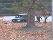 Dramatic moment North Korean defector is shot as he escapes