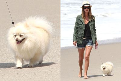 Nicky Hilton enjoys a long walk on the beach with her puffed up pooch. Ahh, the joys of a blossoming romance.