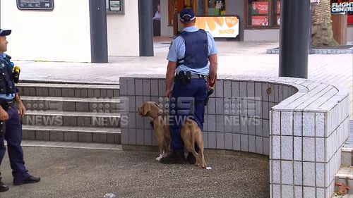 The dog believed to be responsible for the attack.