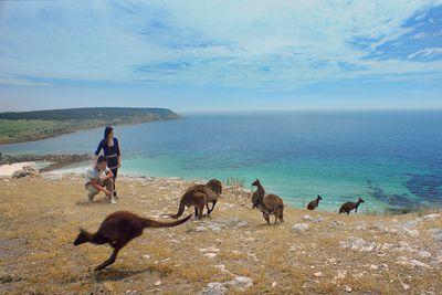 <strong>Kangaroo island, SA</strong>
