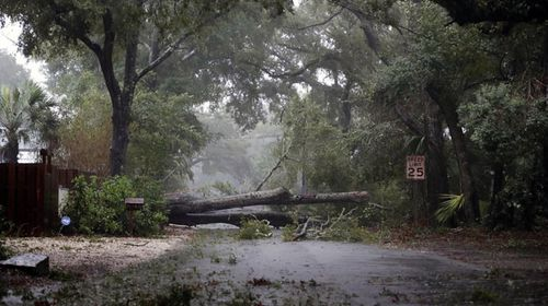A tree blocks the road in St Simons Island, Georgia. (AP)